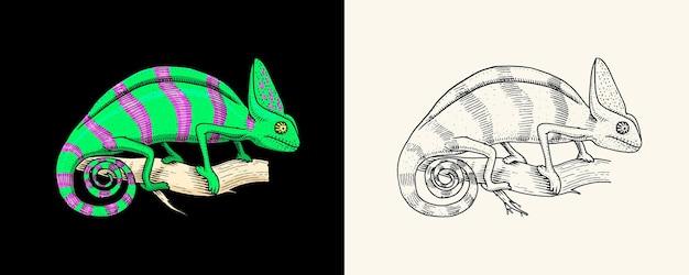 Chamäleon-eidechse amerikanischer grüner leguan exotische reptilien wilde tiere in der natur graviert handgezeichnet