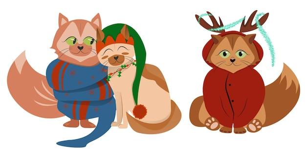 Charakterpaar katze für neujahr