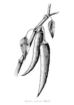 Chili-handzeichnung gravurillustration schwarzweiss-clipart