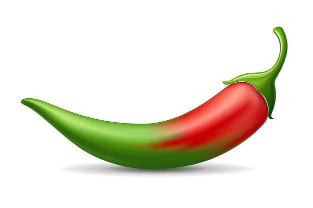 Chili pfeffer rot farbverlauf grün