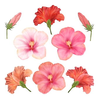 Chinesische rosen. hibiskusblumenset mit blumen