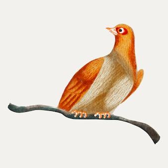 Chinesischer anstrich eines vogels.