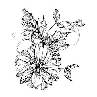 Chrysanthemen-handzeichnung. blumen im strichkunststil.