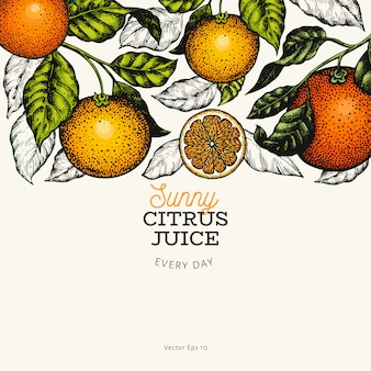 Citrus design vorlage