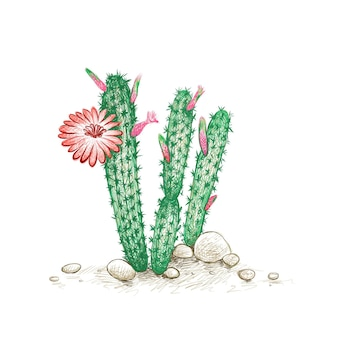Cleistocactus mit roter blume für die gartendekoration