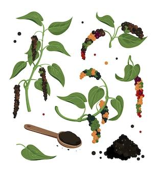 Clipart aus schwarzem pfeffer. schwarze pfefferpflanze mit blättern und pfefferkörnern, isolierte ikonen.