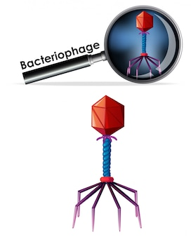 Close up isoliertes objekt des virus bacteriophage
