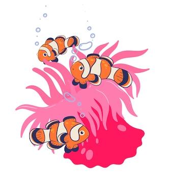 Clownfisch und seeanemone