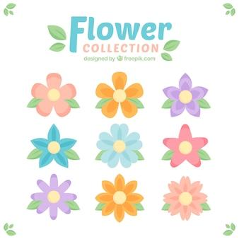 Colección de flores en colores pastell