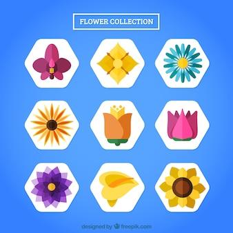 Colección de flores en estilo geométrico