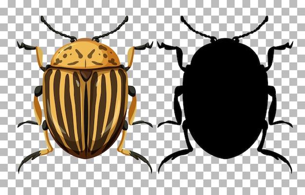 Colorado käfer und seine silhouette