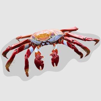 Crab realistische handgezeichnete illustrationen und vektoren