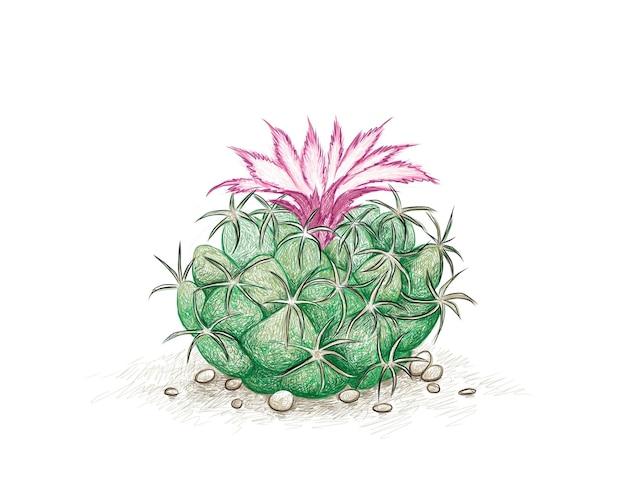 Cumulopuntia kaktus mit rosa blume eine sukkulente mit scharfen dornen für die gartendekoration