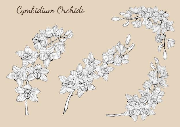 Cymbidium-orchideen stellten eigenhändig zeichnen ein