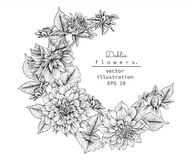 Dahlia leaf und blumenzeichnungen