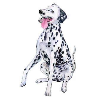 Dalmatinischer hund im aquarell