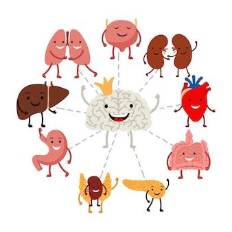 Das gehirn steuert das konzept der inneren menschlichen organe