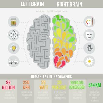 Das menschliche gehirn infografik in flaches design