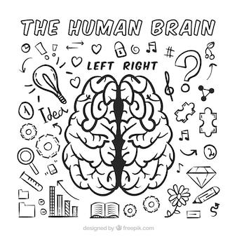 Das menschliche gehirn infografik mit sortiment von kritzeleien