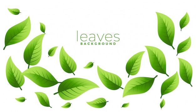 Das schwebende oder fallende grün hinterlässt hintergrunddesign mit copyspace