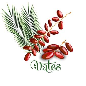 Dattelfrucht mit olivenblättern
