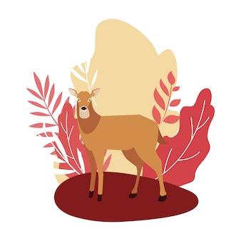 Deer glücklich herbstsaison flach