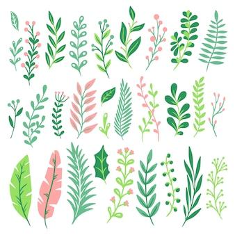 Dekor blätter. grünpflanzeblatt, farnengrün und natürliche farnmit blumenblätter lokalisierten satz