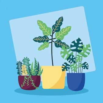 Dekorationspflanzen flache bildgestaltung