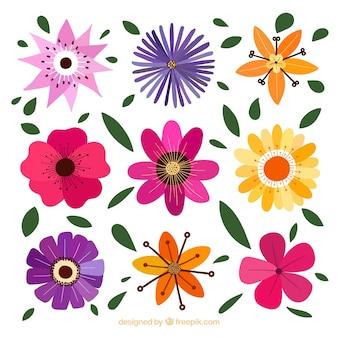 Dekorative blumen mit verschiedenen designs