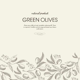 Dekorative natürliche botanische skizzenschablone mit text und organischen grünen olivenzweigen auf licht