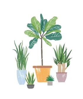 Dekorative zimmerpflanzen flachbild vector illustration. natürliche yucca und sansevieria in blumentöpfen. topfpflanzen, heimtextilien isoliert auf weißem hintergrund. floristik, gartengestaltungselement.
