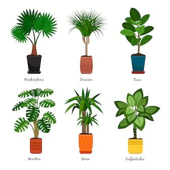 Dekorative zimmerpflanzen in töpfen