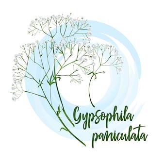 Dekorativer blumengypsophila für brautsträuße