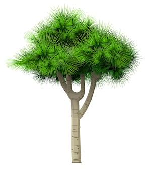 Dekorativer bonsai grüner baum kiefer tanne isoliert