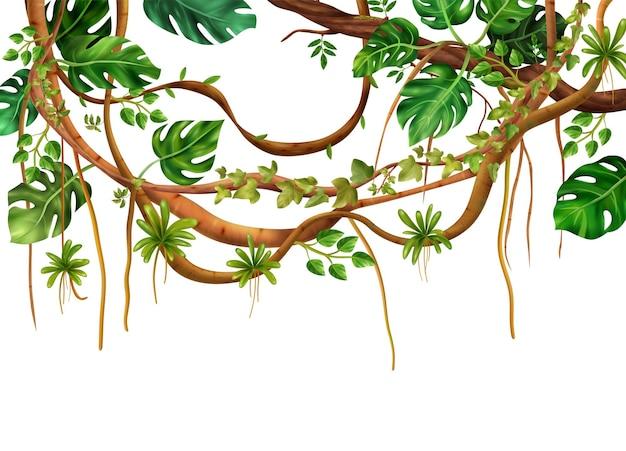 Dekorativer realistischer hintergrund des tropischen dschungelkletterns der holzigen lianenrebe mit fächer wie monstera-pflanzenblätter