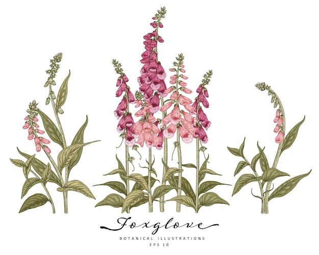 Dekoratives set der fingerhutblume lokalisiert auf weiß