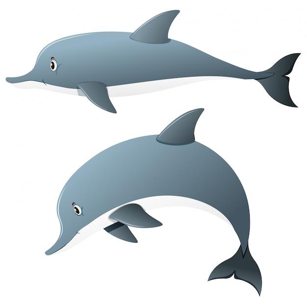 Delfine in zwei aktionen