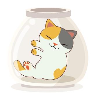 Der charakter der niedlichen katze, die im transparenten glas schläft.