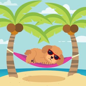 Der geschnittene pudelhund schläft flach auf der hängematte. sommerillustration