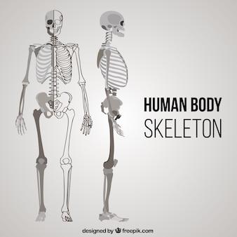 Der menschliche körper skelett in verschiedenen positionen