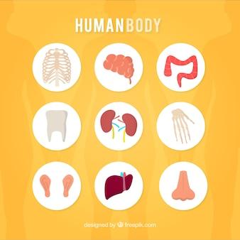 Der menschliche körper symbole