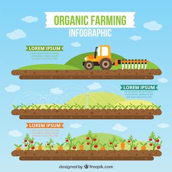 Der ökologische landbau infographie in flaches design