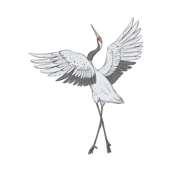 Der rotkranich steht auf einem bein mit hochgezogenen flügeln im skizzenstil