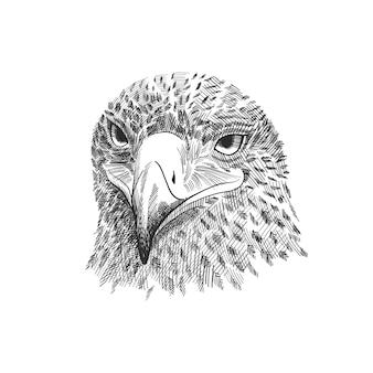 Der sakerfalke falco-cherrug, adler-schwarzweißabbildung