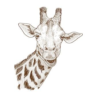 Detaillierte giraffenzeichnung