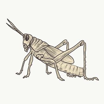 Detaillierte handgezeichnete vintage vektorillustration der heuschrecke