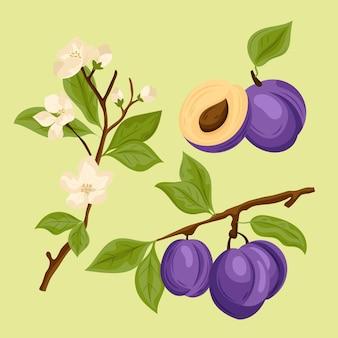 Detaillierte pflaumenfrucht- und blumenillustration