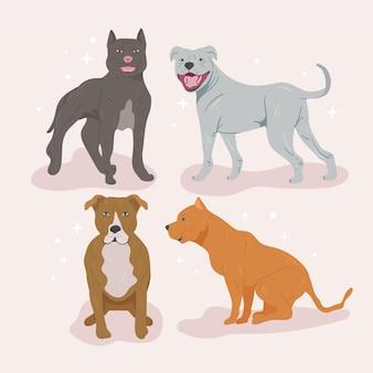 Detaillierte pitbull-hundesammlung