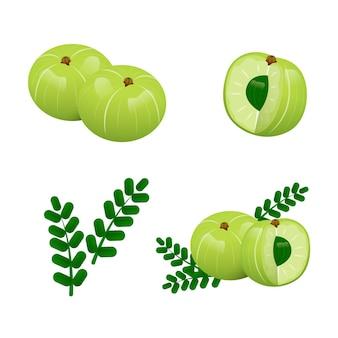 Detaillierte sammlung von amla-fruchtelementen