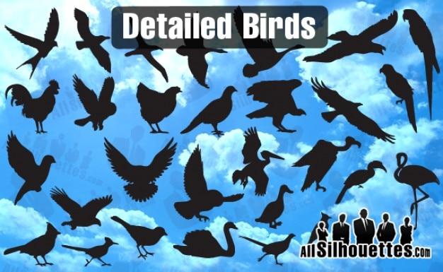 Detaillierte vektor vögel